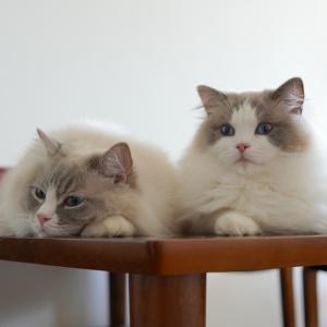猫飼い向けコストコの楽しみ方