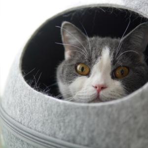 ヨーグルト猫
