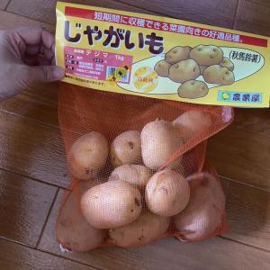 ジャガイモの種芋植え〜デジマ〜