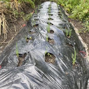 台風10号後の家庭菜園畑の様子