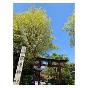 #根津神社 #つつじ  #根津神社つつじ祭り