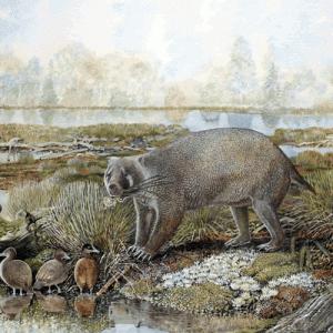 先史時代2500万年前の巨大ウォンバット