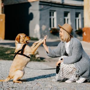 心を落ち着かせる音楽を楽しめて、ワンちゃんと一緒に遊んでいると癒されますよね!