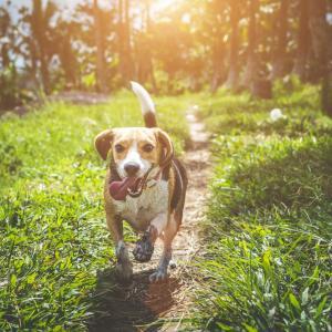動物癒されながらリラックス効果のある音楽を聞いて安らいだ気持ちになりましょう!