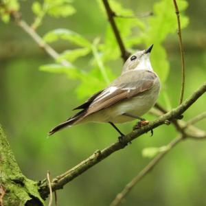 大自然の中に居る鳥の鳴き声で癒されリラックス、耳を澄ませて聴いて下さい