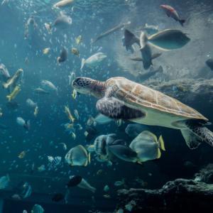 幸運を運ぶウミガメを見て幸せを・リラックス効果のある音楽で癒して下さい