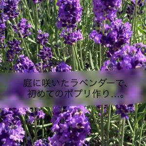 庭に咲いたラベンダーで初めてのポプリ作り・・。