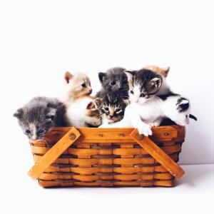 初心者用猫の飼い方の悩みを全部簡単解説*しつけは?ケージは?室内飼育は?一人暮らしは?トイレは?