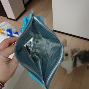 初挑戦、犬の手作りご飯