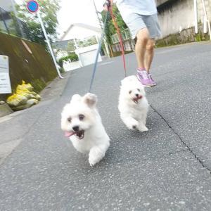 お散歩頑張るエルルとマイロあとおとさん