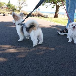 公園でお散歩ミックス犬