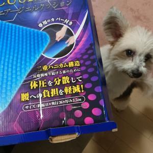 ゲルクッションとミックス犬