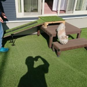 エルル犬用スロープ挑戦