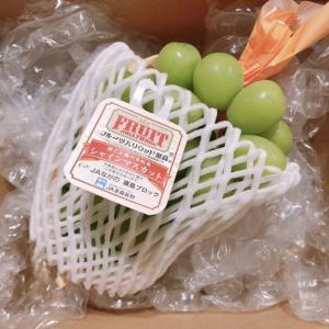 【優待レビュー】アイコムからシャインマスカット(カタログの選択商品)が届きました。