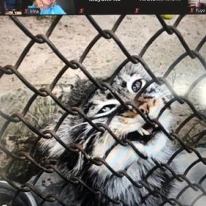 ノボシビルスク動物園オンラインツアー開催しました!