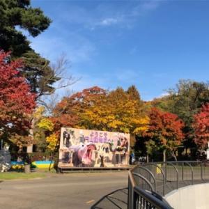 円山動物園の紅葉がとてもきれいでした