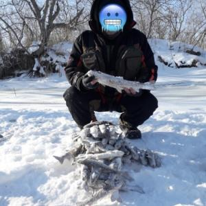 ロシアの川では大量のイワナ?が釣れています。
