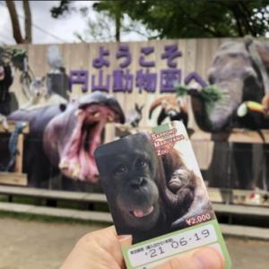 円山動物園の年パス期限が切れちゃった