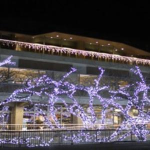 【12月1日〜】能代市役所さくら庭でイルミネーションが点灯するみたい!