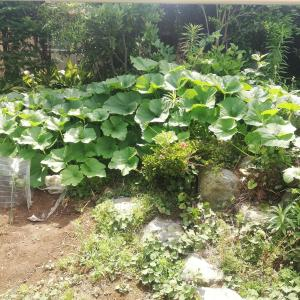 家庭菜園水やり