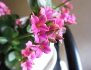 今年前半の花々