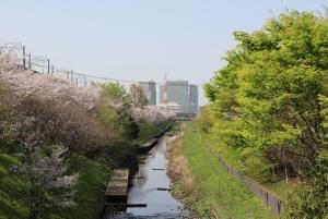 桜と川と新緑