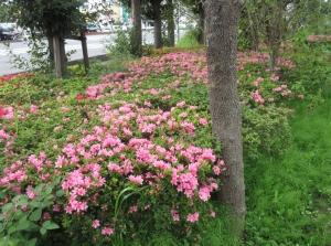 季節は進む・・・桜からツツジへ