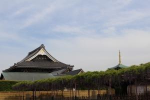 お寺と藤の花