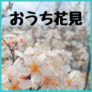 【ステイホーム企画】おうち花見
