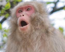 猿、イノシシ、カラス、野生動物の被害