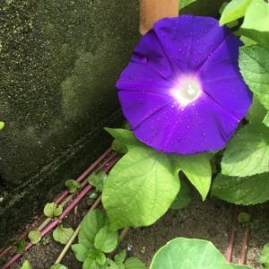庭の花とポッチャリさん一家!