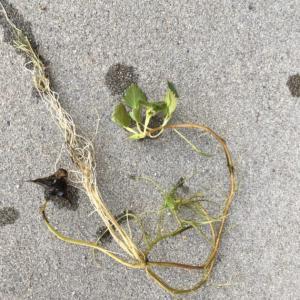 部屋の片付けと水辺の植物