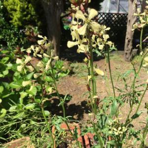 片付け3日目と庭の植物達