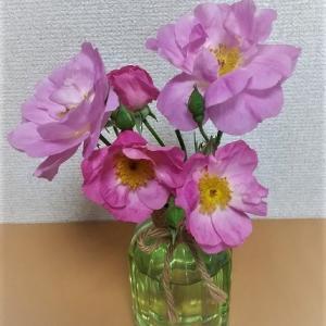 バラの花びらを乾燥中🌹