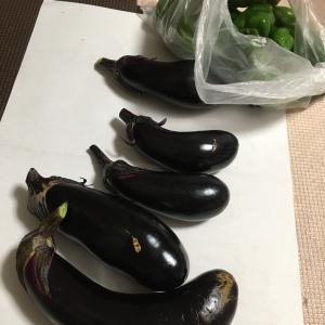 放課後デイでとれた野菜