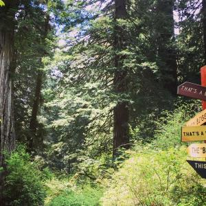 森好き、巨木好きなら絶対行きたい!レッドウッド国立州立公園の楽しみ方