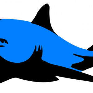 クルマの第一印象は顔で決まる「フロントマスクは鮫顔がカッコいい⁉️」スイフトスポーツの精悍なシャークノーズ