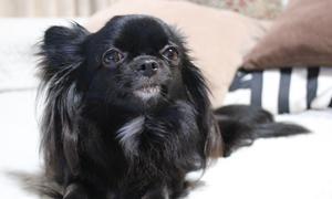 繁殖犬と動物愛護法改正の数値規制