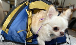 犬用テント購入