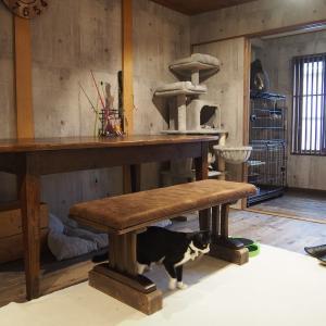 保護ねこカフェneu。【大阪】谷六の隠れ家的ビーガンカフェ