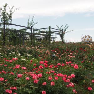 【2021年7月下旬】万博記念公園の様子(平和のバラ園の写真)