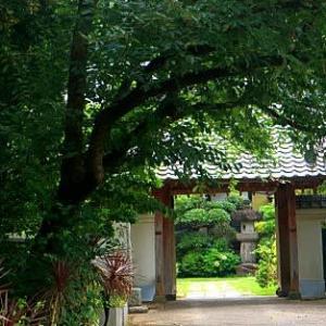 新井宿 宝蔵寺