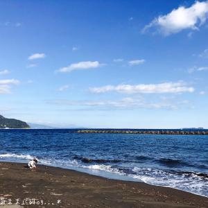 伊豆の朝は海で貝探しを。