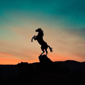 良血牝馬スカイグルーヴの血統が凄い