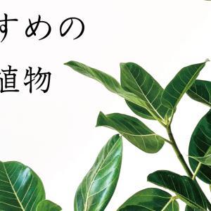 【室内でも元気】おすすめの観葉植物  3選【管理が楽】