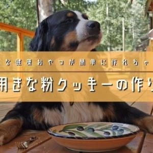 犬用きな粉クッキーのレシピ・作り方!犬用おやつが電子レンジだけで作れちゃう!