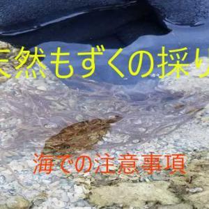 沖縄もずく採り、海での注意事項、おいしい調理方法も紹介