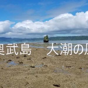 沖縄、奥武島(おくたけじま) 磯あそび 潮干狩りと貝の調理 ソデカラッパと大潮の神秘的な風景