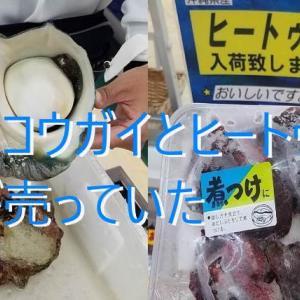 沖縄の食文化 夜光貝(ヤコウガイ)とヒィートゥー(イルカ)が名護で売られていたので食べてみた。