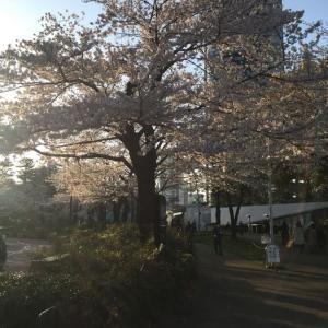 それでも走るか? 319  桜がきれいな駅チカのオアシス!?